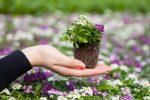 Миниатюра к статье Посеем цветы правильно