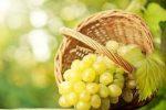 Миниатюра к статье Виноград «Августин» — стойкий и вкусный