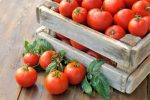 Миниатюра к статье Посадите в огороде «Дубраву» — будете с урожаем