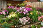 Миниатюра к статье Цветы для клумбы, цветущие все лето