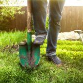 Миниатюра к статье Огород без хлопот, не копать, не полоть, и не поливать