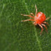 Миниатюра к статье Спасаем комнатные растения от паутинного клеща