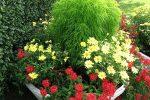 Миниатюра к статье Однолетние цветы для дачи цветущие все лет