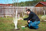 Миниатюра к статье Чем обработать деревья и кусты в саду весной от вредителей