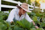 Миниатюра к статье Июль [year], благоприятные дни для садовода-огородника