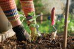 Миниатюра к статье Лунный посевной календарь садовода и огородника на [year] года