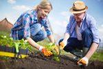 Миниатюра к статье Лунный календарь на апрель [year] года садовода и огородника
