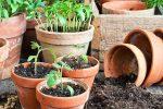 Миниатюра к статье Когда сажать помидоры на рассаду в 2018 году?