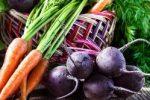 Миниатюра к статье Когда убирать морковь и свеклу в Подмосковье?