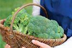 Миниатюра к статье Посадите лучший сорт брокколи