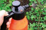 Миниатюра к статье Борная кислота для растений