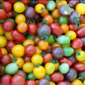 Миниатюра к статье Сорта томатов сибирской селекции на 2017 год