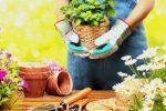 Миниатюра к статье Удобрения для комнатных цветов в домашних условиях