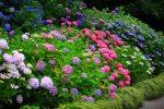 Миниатюра к статье Декоративные кустарники для средней полосы России