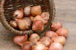 Миниатюра к статье Хранение луковиц гладиолусов зимой в домашних условиях