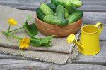 Миниатюра к статье Подкормка огурцов во время цветения и плодоношения