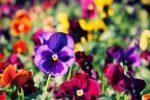 Миниатюра к статье Какие цветы посадить на даче