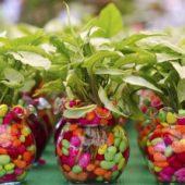 Миниатюра к статье Домашние цветы в горшках, фото и название