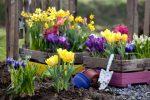 Миниатюра к статье Осенняя посадка цветов