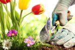 Миниатюра к статье Лунный календарь на апрель [year] года садовода и огородника (Украина)