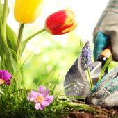 Миниатюра к статье Лунный календарь на апрель 2017 года садовода и огородника (Украина)