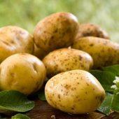 Миниатюра к статье   Картофель «Уладар» — ранний, вкусный, урожайный
