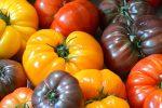 Миниатюра к статье Лучшие семена томатов для теплицы