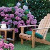 Миниатюра к статье Цветущие кустарники — украшение усадьбы