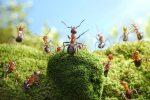 Миниатюра к статье Как избавиться от муравьев на дачном участке?