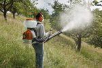 Миниатюра к статье Тля на плодовом дереве — методы борьбы