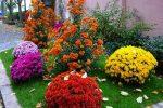 Миниатюра к статье Цветущие все лето многолетники для сада