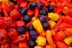 Миниатюра к статье Лучшие сорта перцев для открытого грунта