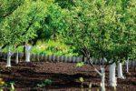 Миниатюра к статье Не допустите вредителя и болезни в сад