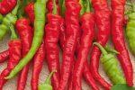 Миниатюра к статье Перец «Бараний рог»: острый урожайный сорт