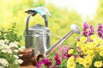 Миниатюра к статье Лунный посевной календарь садовода и огородника на июнь [year] года