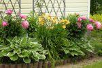 Миниатюра к статье Каталог многолетних цветов для дачи. Фото с названиями.
