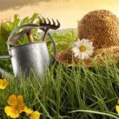 Миниатюра к статье Посевной календарь на 2017 для огородников Ростовской области