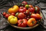 Миниатюра к статье Какие сорта помидор самые урожайные для открытого грунта