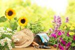 Миниатюра к статье Что сажать в мае? Месяц май для огородника (Лунный календарь)