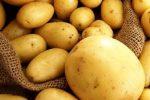 Миниатюра к статье «Наташа» — картофель для любителей желто плодных сортов