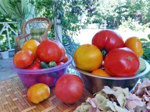 Подборка новых сортов томатов сибирской селекции на 2020 год
