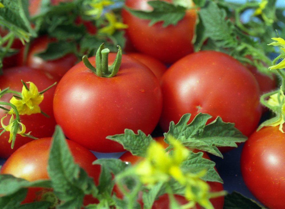 tomat103