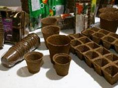 рассада-баклажан-выращивание-рассады-баклажанов-посадка-баклажанов-на-рассаду