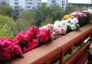 godeciya-na-balkone