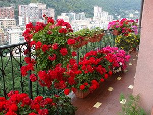 na-balkone1