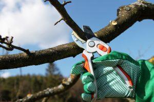 обрезку и чистку дерева