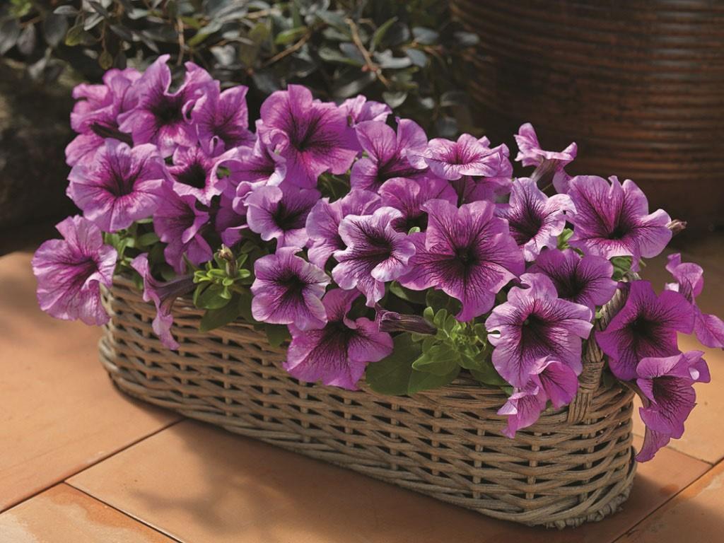 Название цветов цветущие все лето каталог с фото