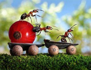 Как избавиться от муравьёв на огороде народными средствами