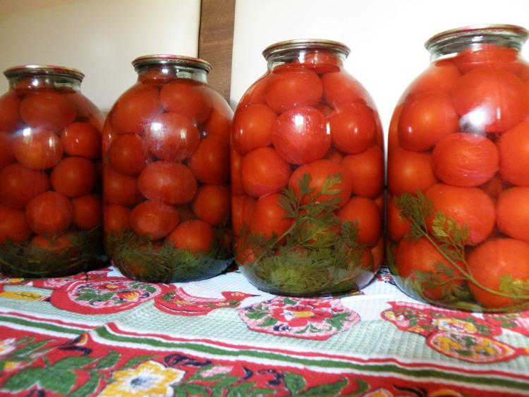 помидоры с морковной ботвой на зиму рецепты