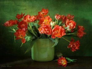 какие цветы нельзя держать дома фото и приметы по фен шуй